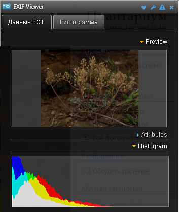 http://forum.plantarium.ru/misc.php?action=pun_attachment&item=10217&download=0