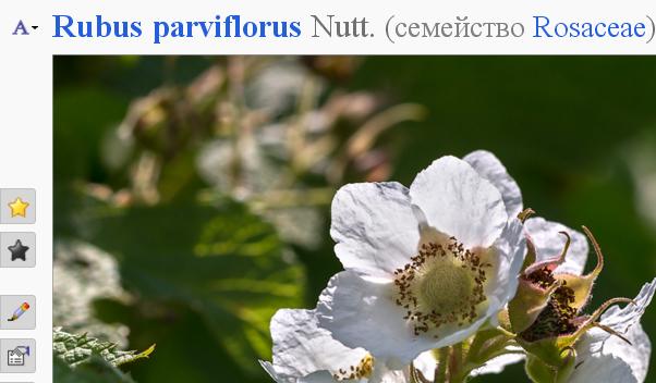 http://forum.plantarium.ru/misc.php?action=pun_attachment&item=11056&download=0