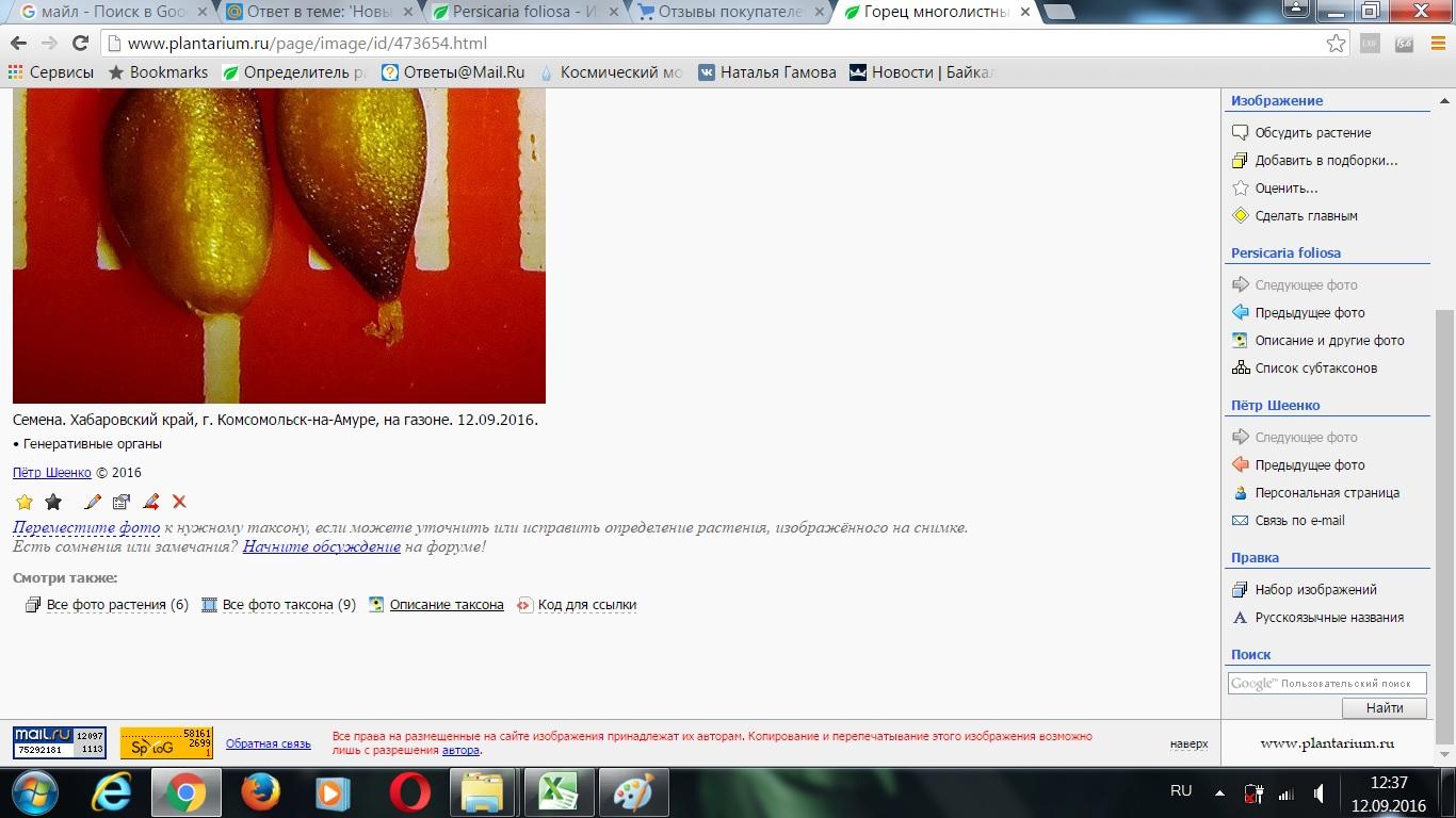 http://forum.plantarium.ru/misc.php?action=pun_attachment&item=11239&download=0