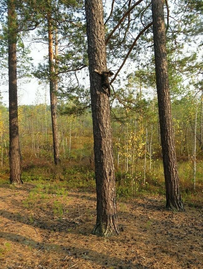 http://forum.plantarium.ru/misc.php?action=pun_attachment&item=11996&download=1