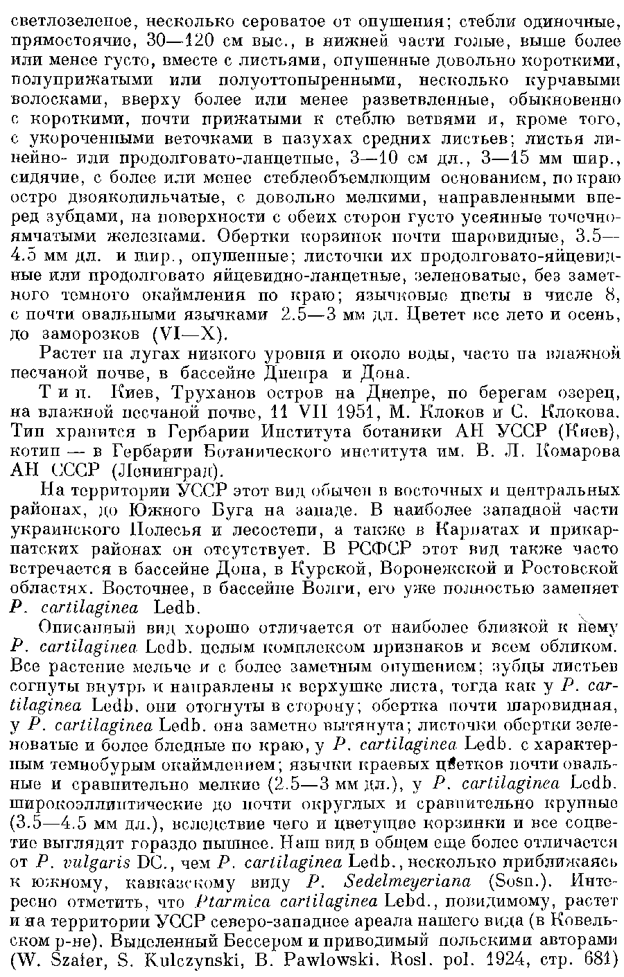 Ptarmica_borysthenica_2a.png
