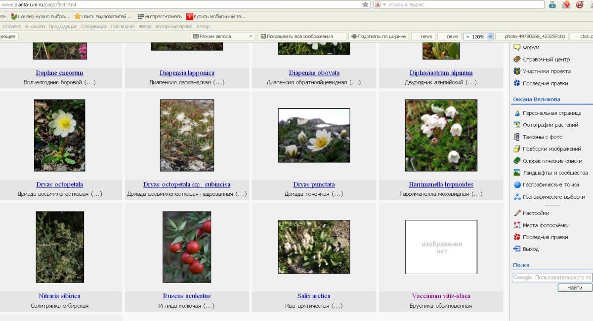 http://forum.plantarium.ru/misc.php?action=pun_attachment&item=15907&download=0