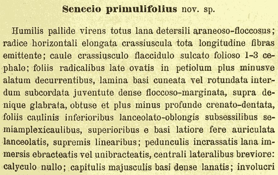 Senecio_primulifolius_1a.png