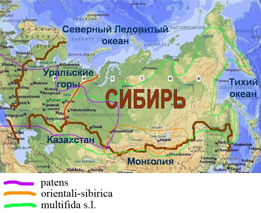 http://forum.plantarium.ru/misc.php?action=pun_attachment&item=18732&download=0