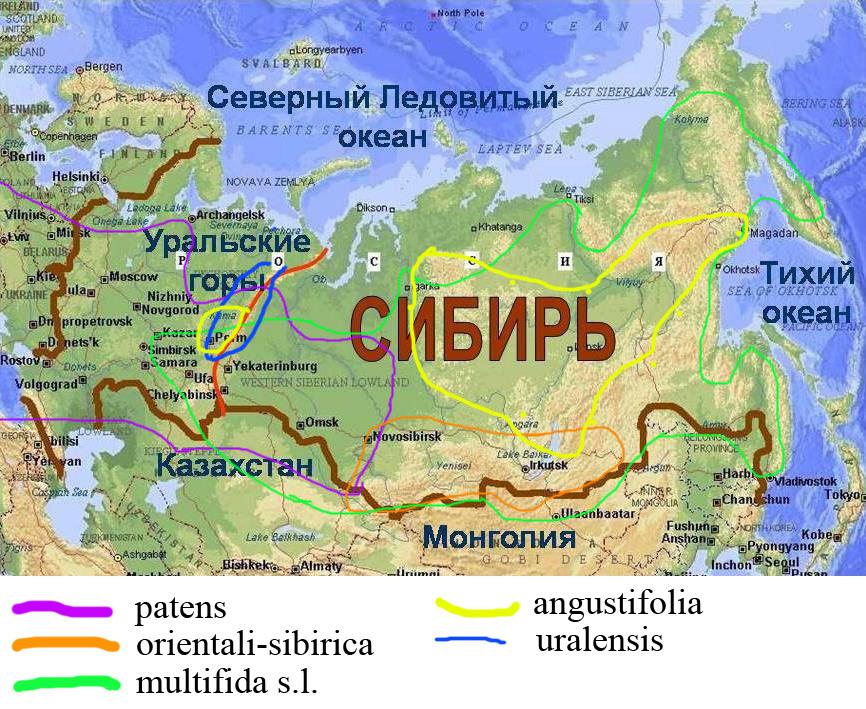 http://forum.plantarium.ru/misc.php?action=pun_attachment&item=18733&download=0