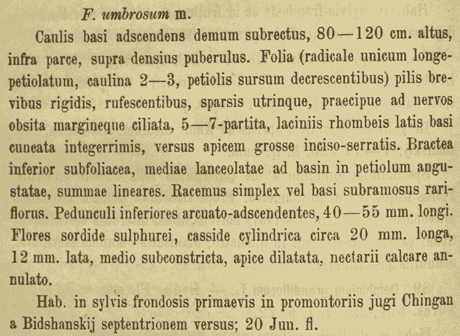 Aconitum_lycoctonum_genuinum_umbrosum_2a.png
