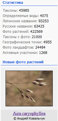http://forum.plantarium.ru/misc.php?action=pun_attachment&item=20874