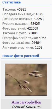 http://forum.plantarium.ru/misc.php?action=pun_attachment&item=20874