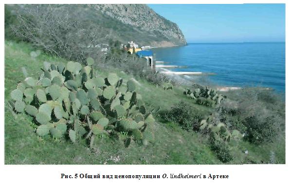 http://forum.plantarium.ru/misc.php?action=pun_attachment&item=22258&download=0