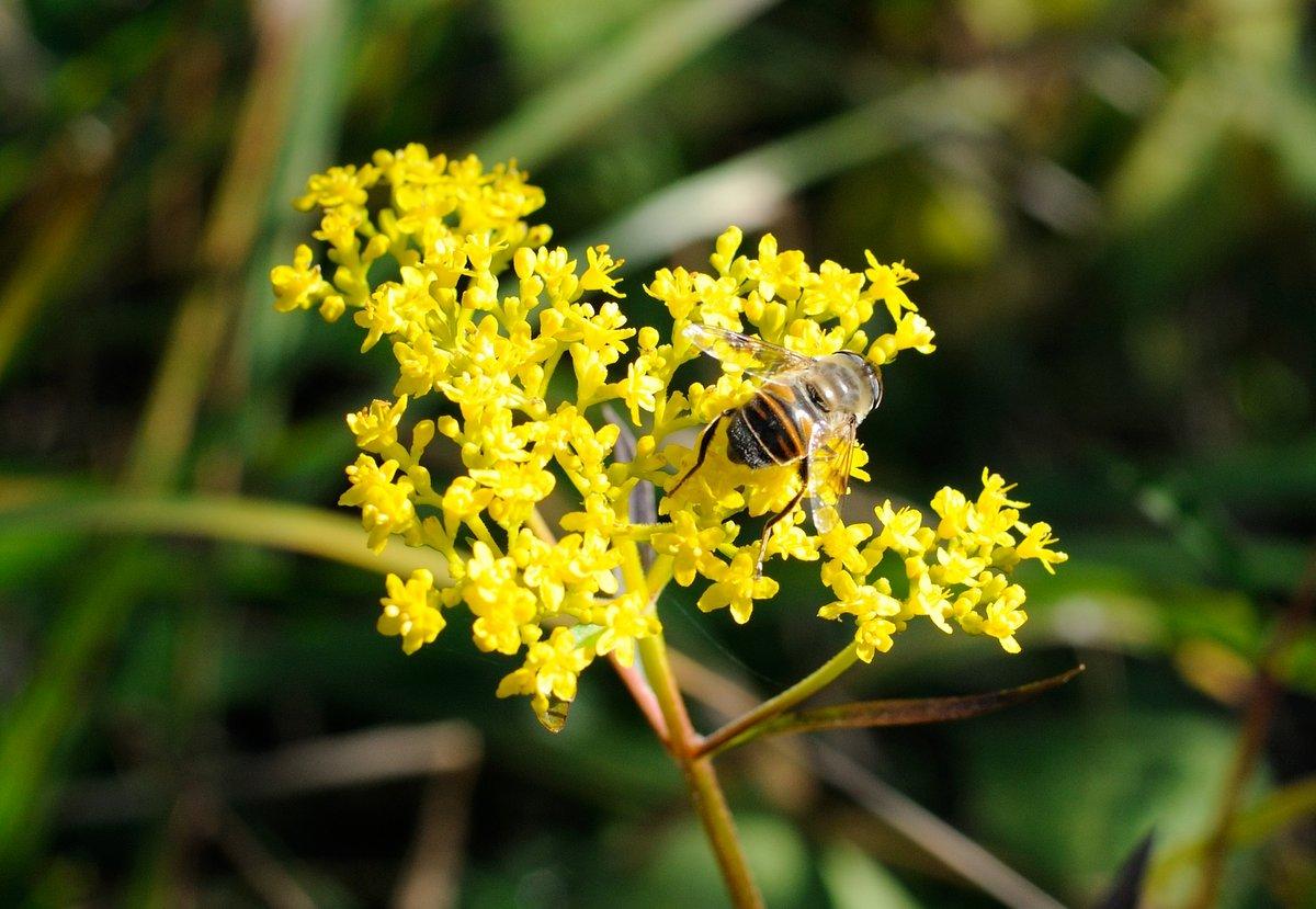 Лекарственные травы приморья фото