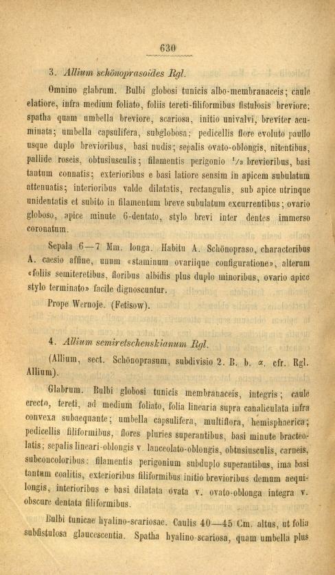 Allium-1.jpg