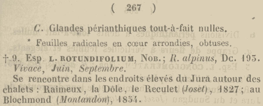 Lapathum_rotundifolium_1a.png