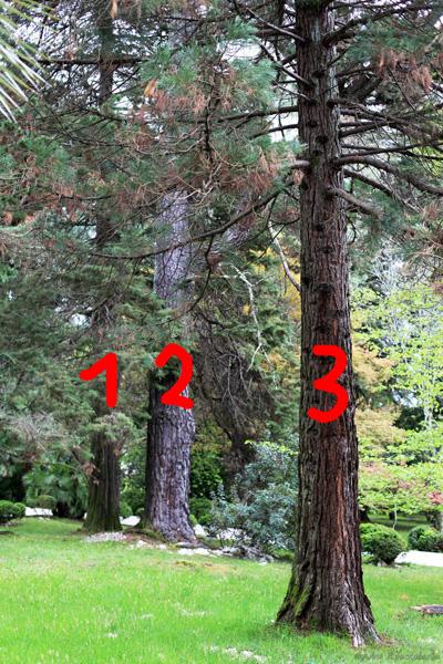 Три дерева.jpg