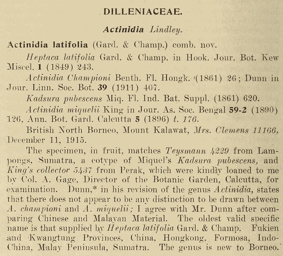 Actinidia_latifolia_1a.png