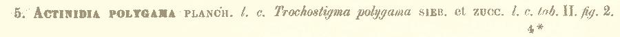 http://forum.plantarium.ru/misc.php?action=pun_attachment&item=24352