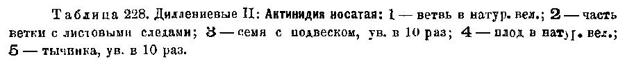 http://forum.plantarium.ru/misc.php?action=pun_attachment&item=24358