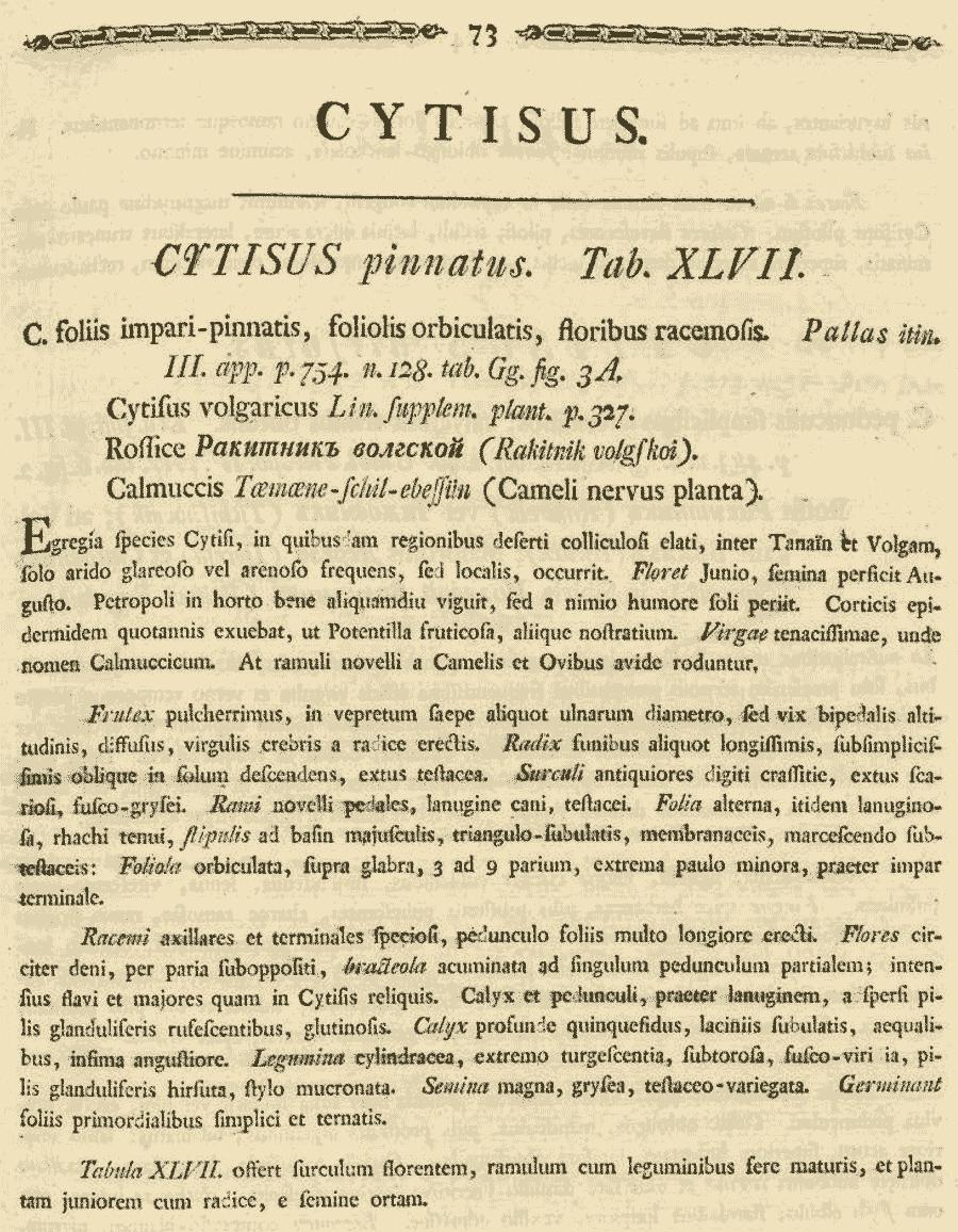Cytisus_pinnatus_1a.png