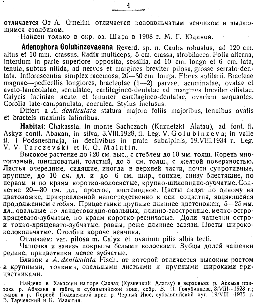 Adenophora_golubinzevaeana_1a.png
