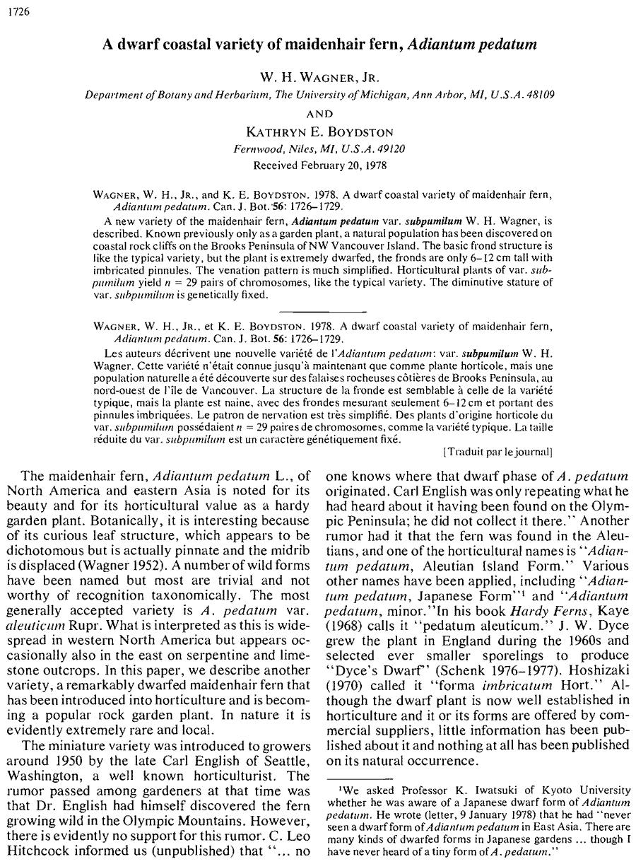 Adiantum_pedatum_subpumilum_1a.png