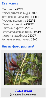 https://forum.plantarium.ru/misc.php?action=pun_attachment&item=26651&download=0