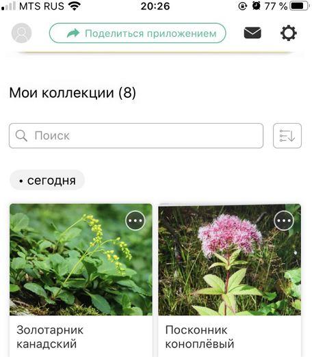 https://forum.plantarium.ru/misc.php?action=pun_attachment&item=27485&download=0