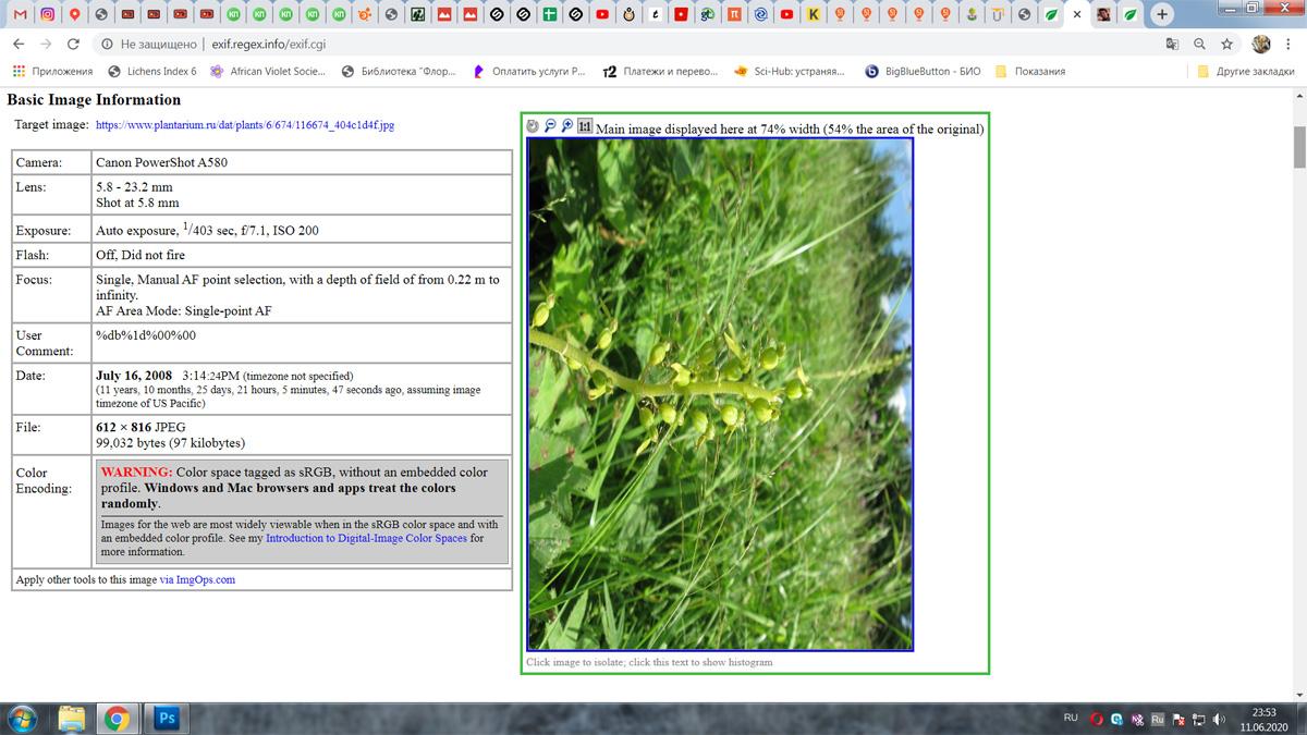 https://forum.plantarium.ru/misc.php?action=pun_attachment&item=28733&download=0