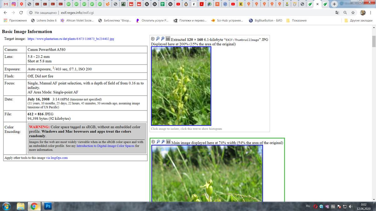 https://forum.plantarium.ru/misc.php?action=pun_attachment&item=28734&download=0