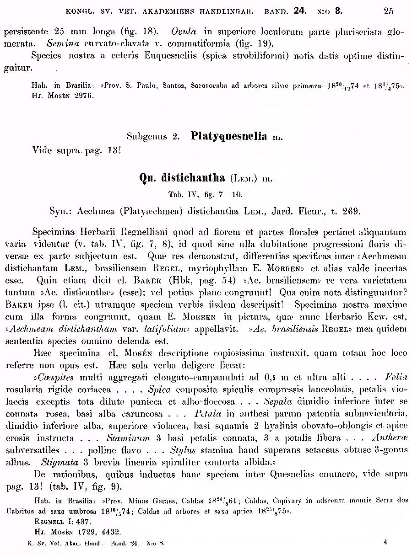 https://forum.plantarium.ru/misc.php?action=pun_attachment&item=29847