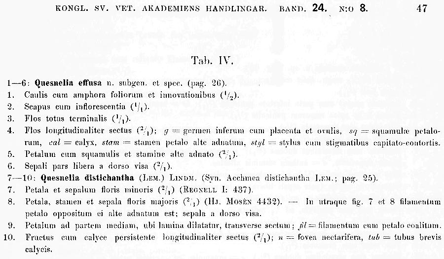https://forum.plantarium.ru/misc.php?action=pun_attachment&item=29848