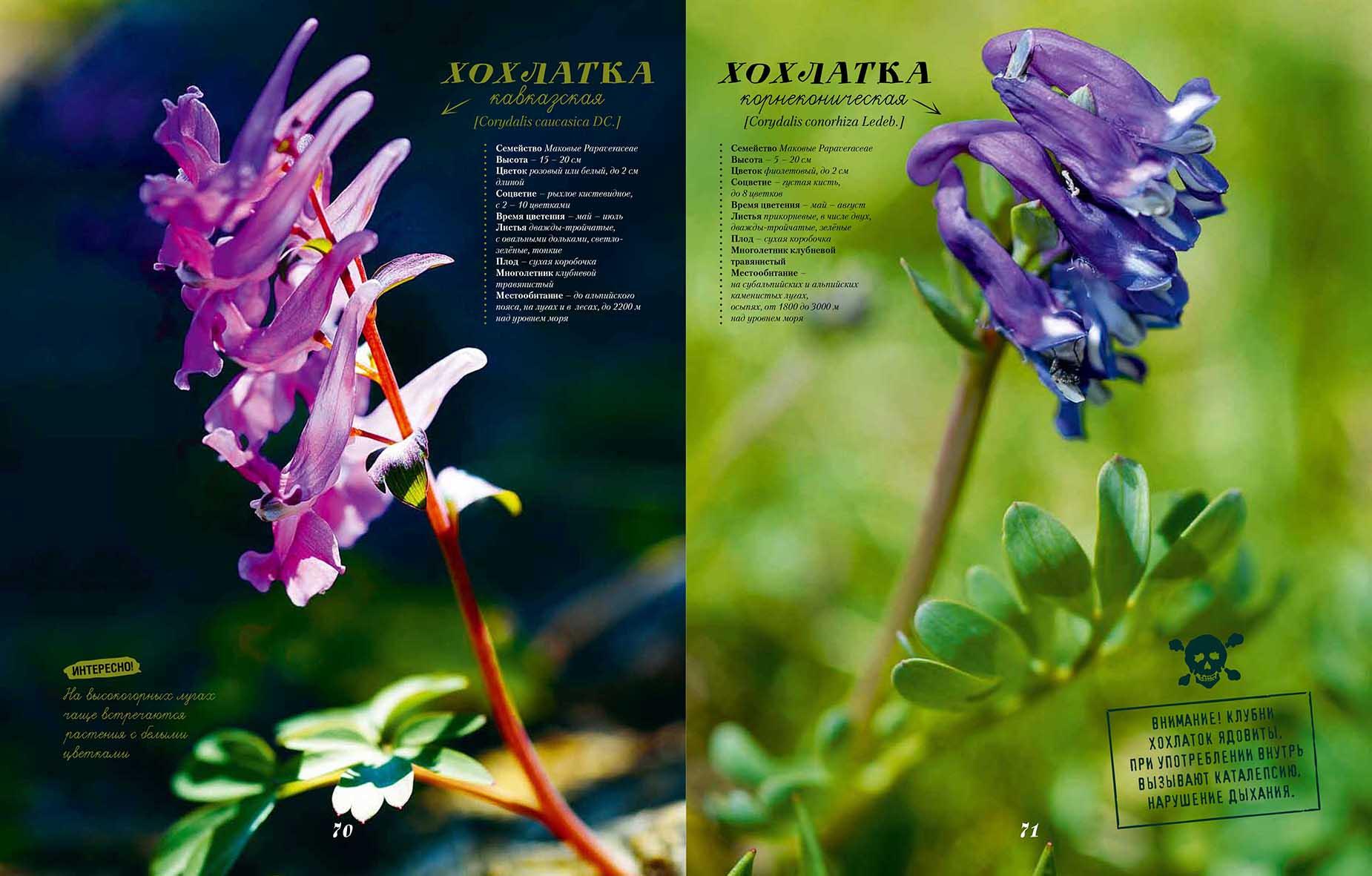 Растения44.jpg