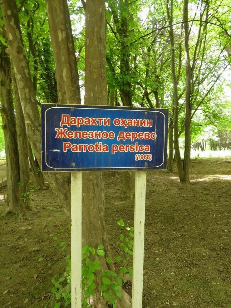 https://forum.plantarium.ru/misc.php?action=pun_attachment&item=30133&download=0