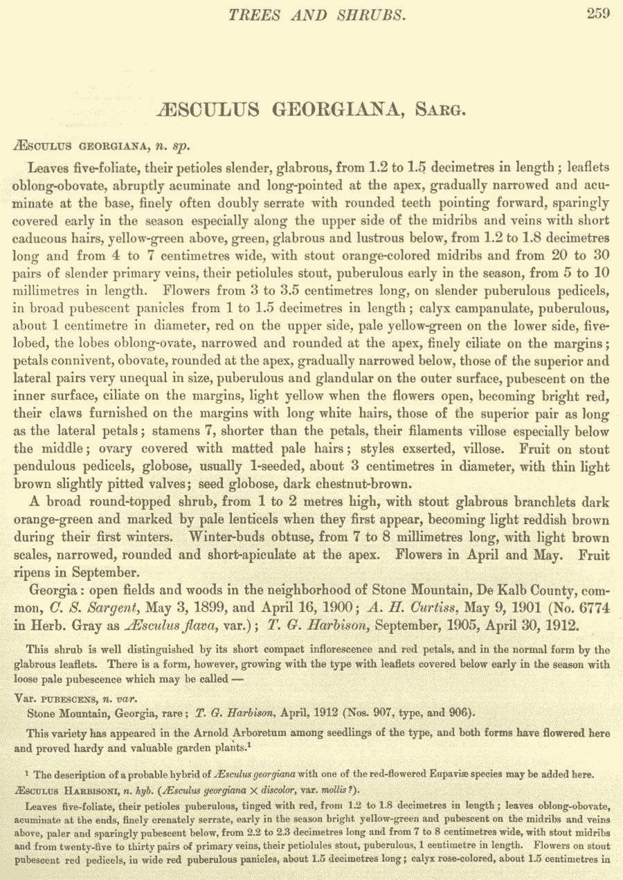 Aesculus_georgiana_1a.png