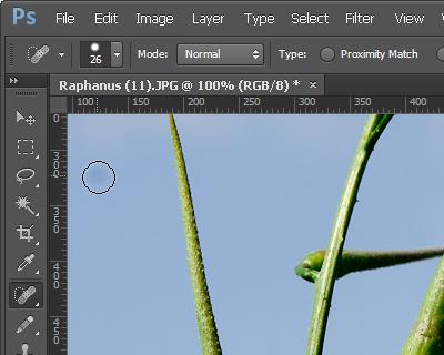 http://forum.plantarium.ru/misc.php?action=pun_attachment&item=6888&download=0