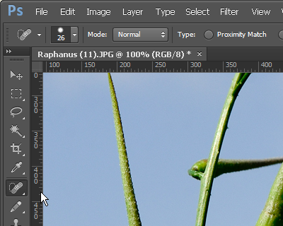 http://forum.plantarium.ru/misc.php?action=pun_attachment&item=6889&download=0