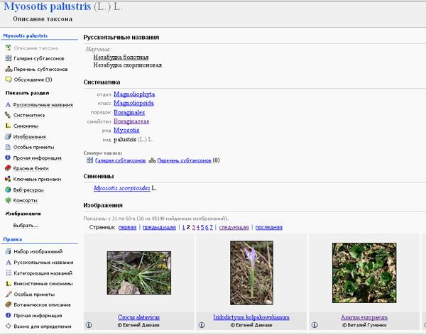 http://forum.plantarium.ru/misc.php?action=pun_attachment&item=7328&download=0